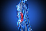 Digital blue human with highlighted spine