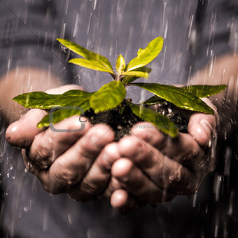 Close up of hands holding seedling in the rain