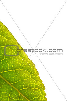 Green leaf with copy space