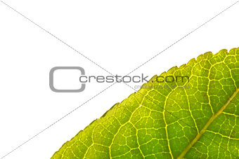 Close up of green leaf with copy space