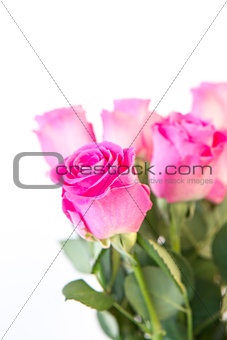 Bouquet of pink roses close up