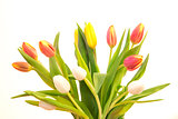 Bouquet of colourful tulips