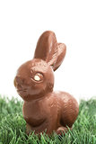 Chocolate bunny rabbit sitting on grass