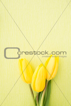Three yellow tulips green painted background