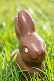 Chocolate bunny in the grass