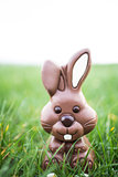 Chocolate bunny sitting in the grass