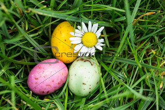 Small easter eggs nestled in the grass with a daisy