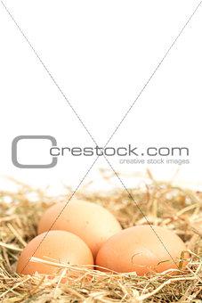 Three eggs nestled in straw nest