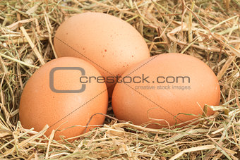 Three eggs nestled in straw