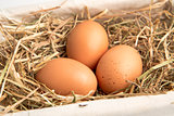 Three eggs in a white basket