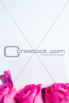 Bouquet of pink roses with empty card