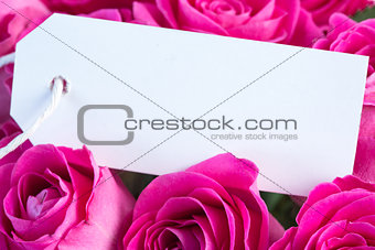 Bouquet of pink roses with an empty card