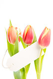 Three tulips with a blank card