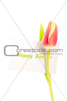 A tulip with a happy easter card