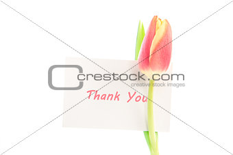 A tulip with a thank you card