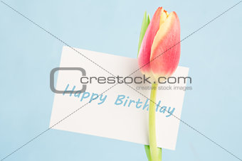 A beautiful tulip with a happy birthday card