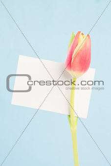A beautiful tulip with a empty card