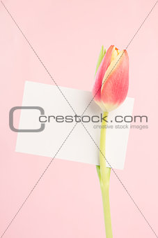 A tulip with an empty card