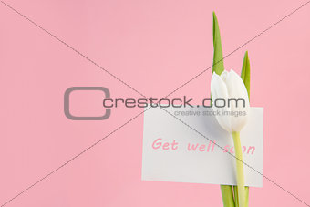 Close up of white tulip with a get well soon in pink card on a pink background