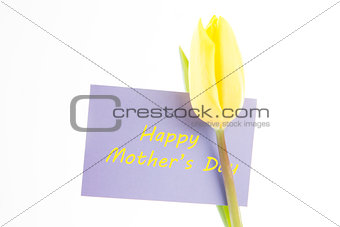 Beautiful yellow tulip with a mauve happy mothers day card on a white background