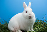 White bunny rabbit sitting on grass