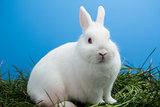 White bunny rabbit sitting on grass