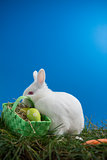 Fluffy bunny rabbit sitting on grass with basket of easter eggs
