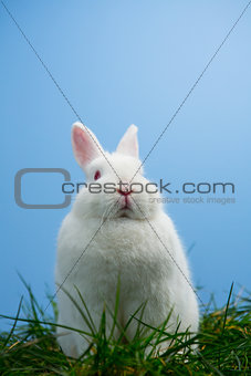 Cute white bunny sitting on grass