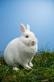 White fluffy bunny sitting on grass