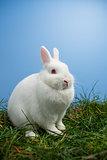 White fluffy bunny sitting on grass