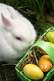 White bunny sitting beside easter eggs in green basket