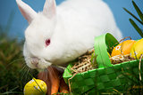 White rabbit sitting beside easter eggs in green basket