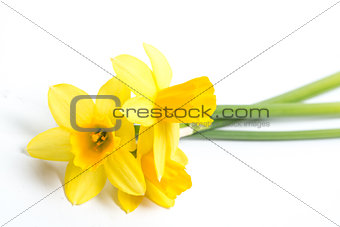 Three daffodils resting on surface