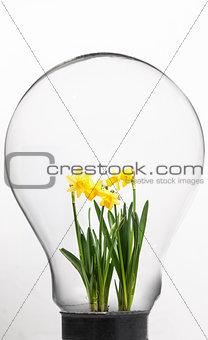 Daffodil inside light bulb