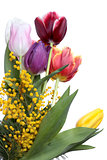 Tulips and mimosa