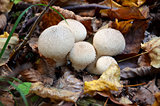 Macro photography of white mushrooms in forest