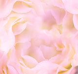 Gentle Floral Background / Flower's petals are made as macro sho
