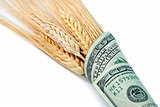 money wrapped wheat