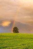Rainbow on the barley field
