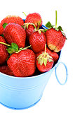 Strawberries in Blue Bucket