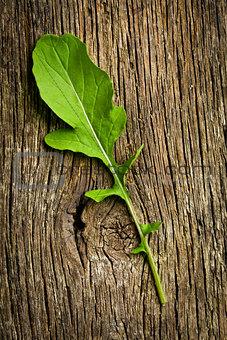 fresh arugula leaf