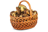 Wicker basket with cepe mushrooms