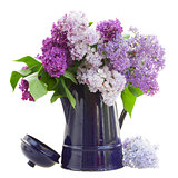 Lilac in blue garden pot