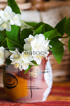 Beautiful flowers of a jasmin in a pot, close up