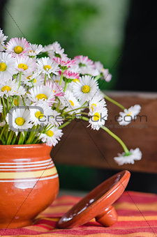 Beautiful daisy flowers in a pot