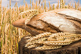 Bread and wheat cereal crops.