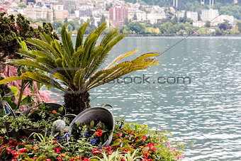Nature adorn the promenade in Montreux