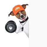 fitness dog  banner