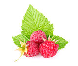 ripe raspberry with green leaf