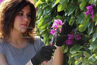 Beautiful gardener woman cutting flowers with secateurs